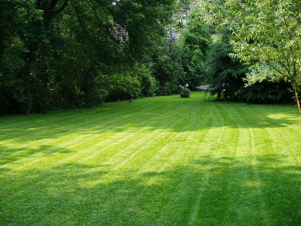 A healthy and freshly mowed lawn